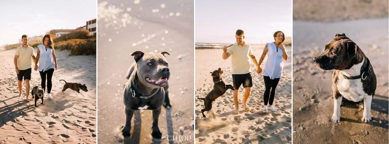 idée photos de grossesse avec chien